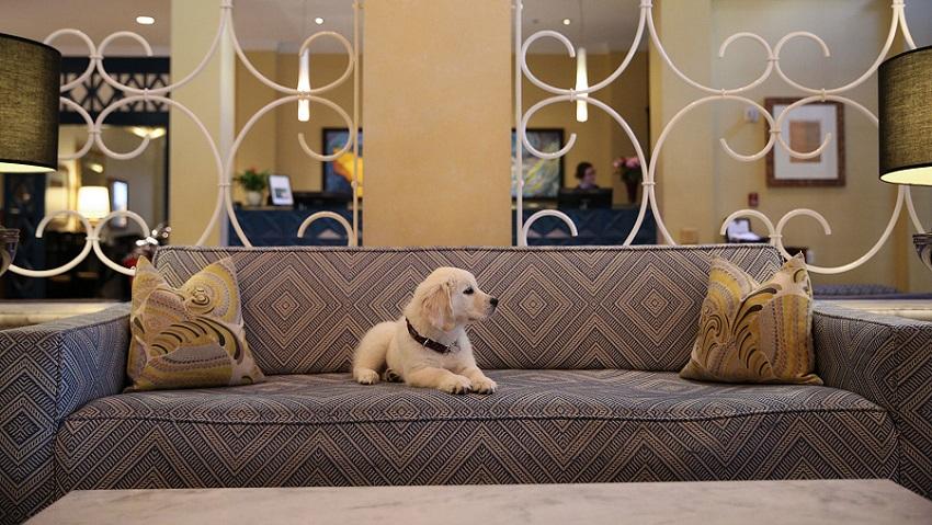 labrador-puppy.jpg